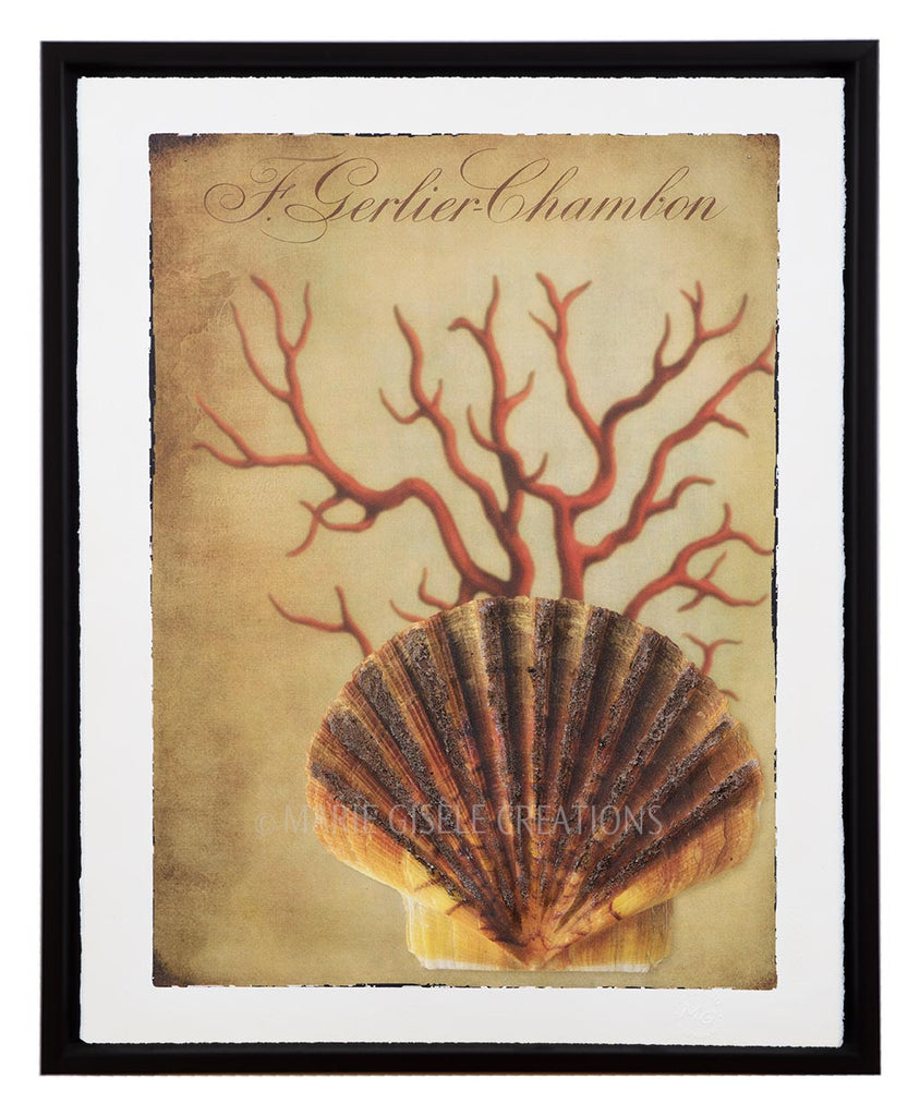 Scallop Shell and Sea Fan II