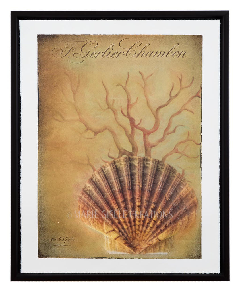 Scallop Shell and Sea Fan I