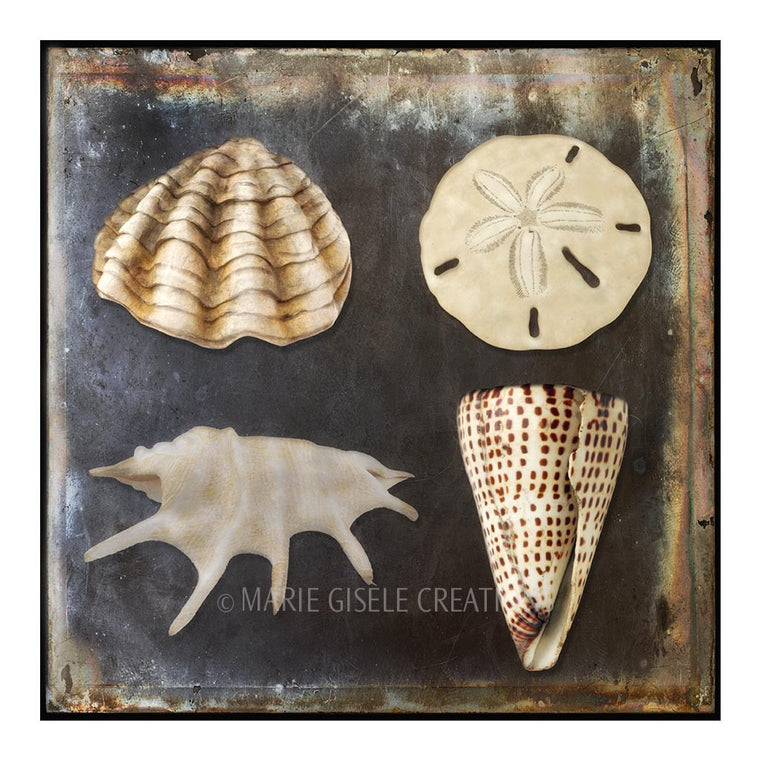 Natural Seashell Quartet