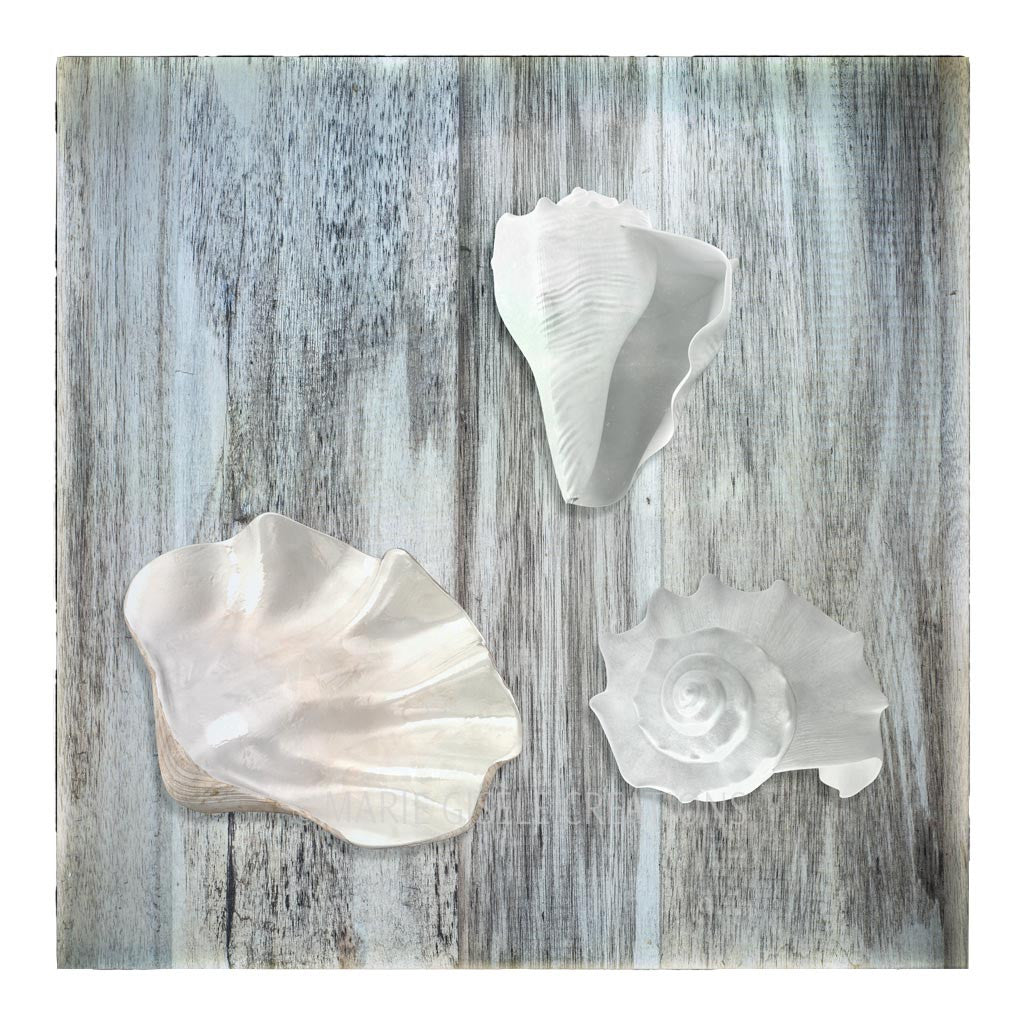 Trio of White Seashells