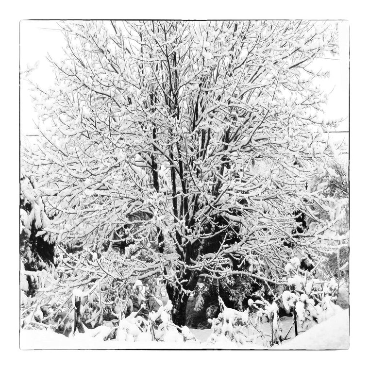Winter Trees Triptych I