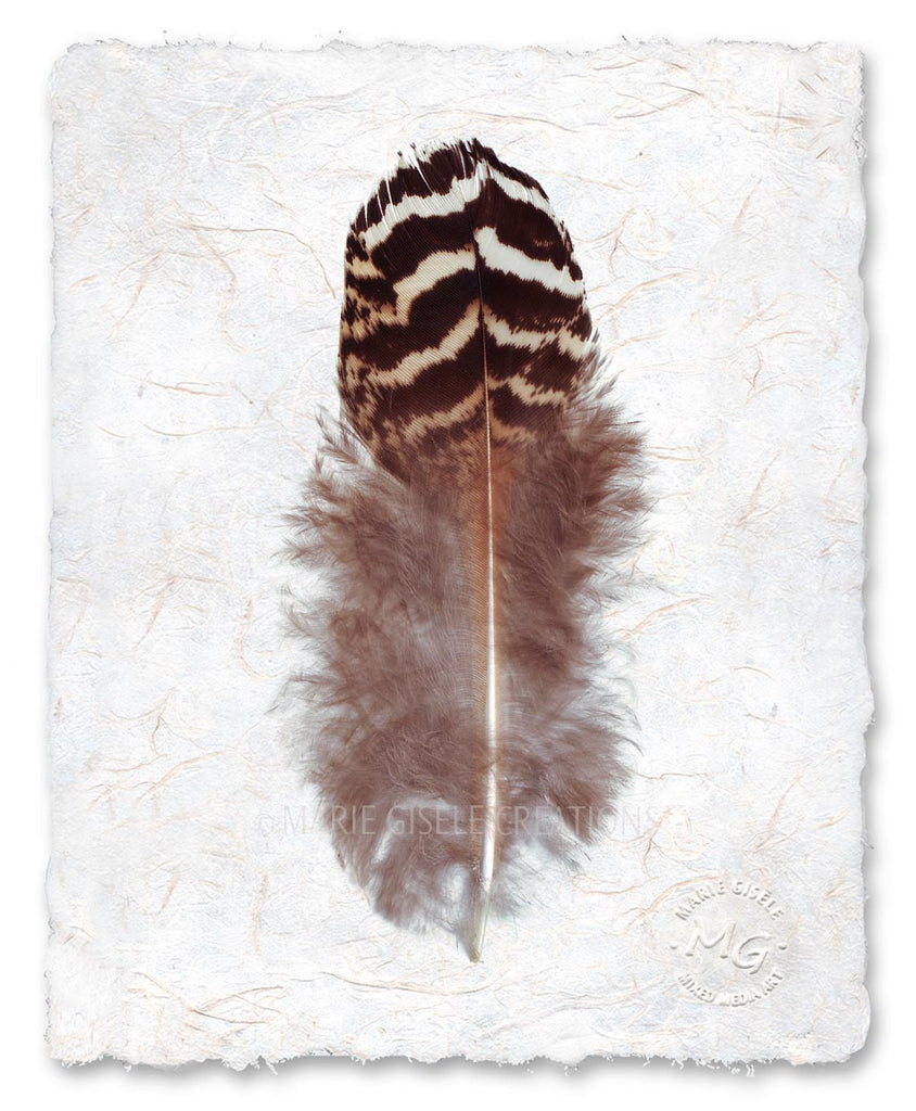 Zebra Feather III