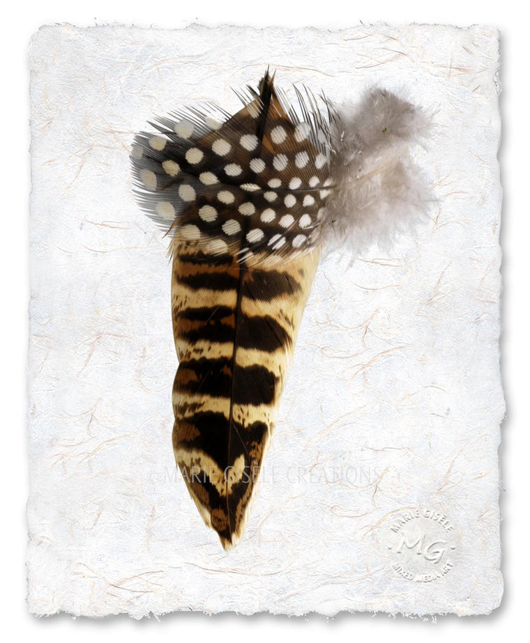 Zebra Feather II