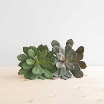 Medium Faux Succulent - Rug & Weave