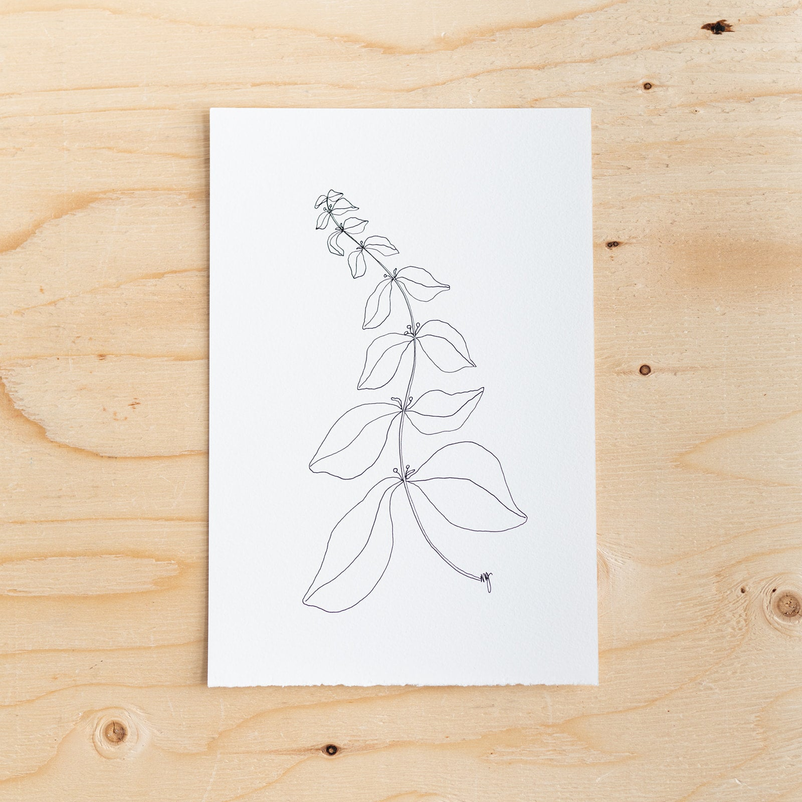 Botanical Line Drawing by Melissa Mary Jenkins - Rug & Weave