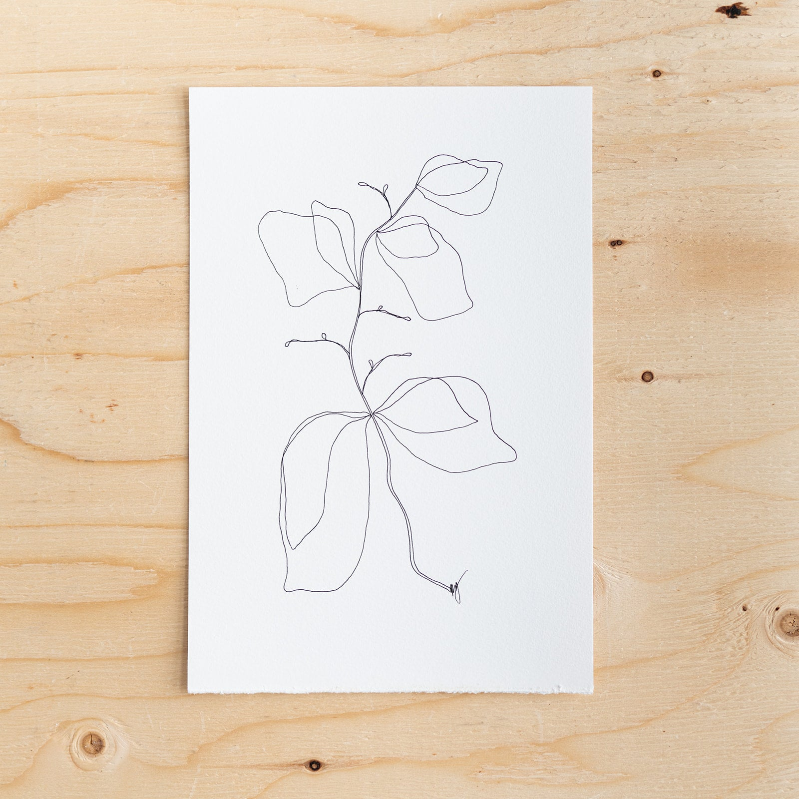 Botanical Line Drawing by Melissa Mary Jenkins