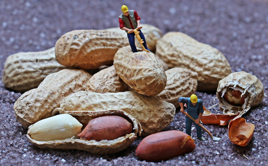 how-many-peanuts-does-it-take-to-make-a-jar-of-amnas-natural-organic-peanut-butter-lahore-pakistan