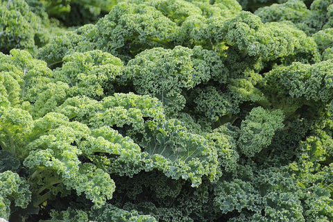 kale and cancer