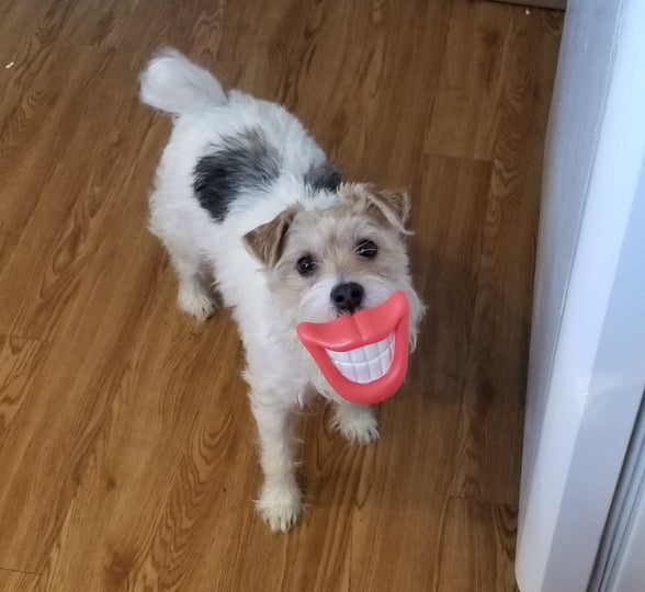 Say Cheese Cheeze Smile Face Dog Squeaker Toy