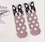 Boston Terrier Dog Polka Dot Ladies Socks