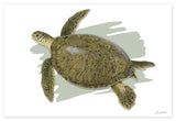 """Adult Green Turtle"""
