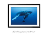 """Humpback Whale and Calf"""