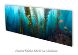 """Exploring the Forest"" 26X70 Limited Edition Satin"