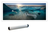 """Golden Rays"" 14X36 Limited Edition Gloss"