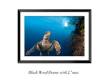 """Great Wall Hawk"" 24X36 Framed Fine Art Paper"