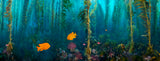 """Kelp Forest Damsels"""