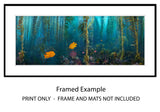 """Kelp Forest Damsels"" Artist Proof"