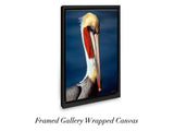 """Brown Pelican"""