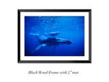"""Humpback Mother and Calf"""