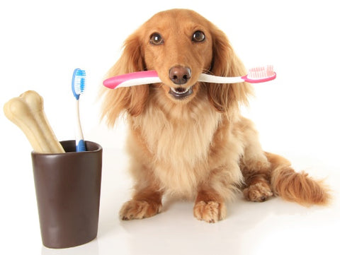 dog teeth cleaning and brushing