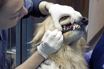 cost of dog teeth cleaning
