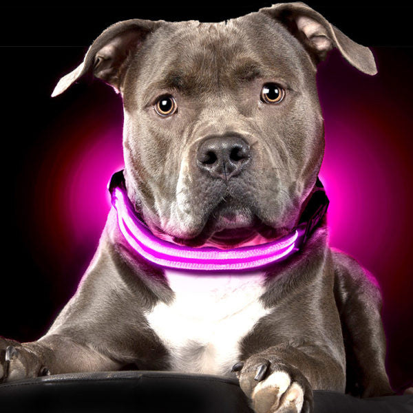 FREE! Led Light Collar for your Dog's Night Safety (Just pay Shipping) , Collar, Starfelia Starfelia