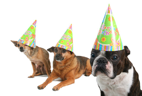 3 dogs wearing birthday hats