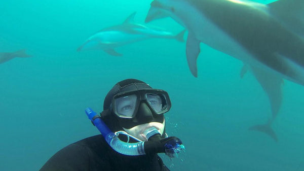 swimming with dolphins kaikoura see more do more hassle free tours