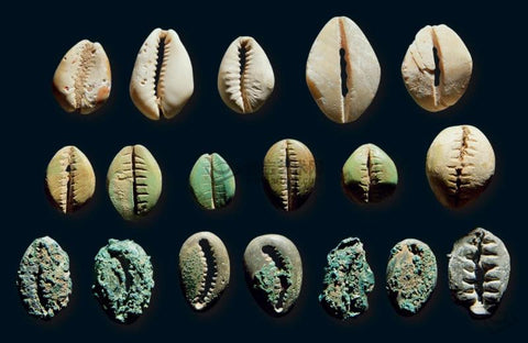 Ancient Chinese cowries made of shell, bone, and bronze