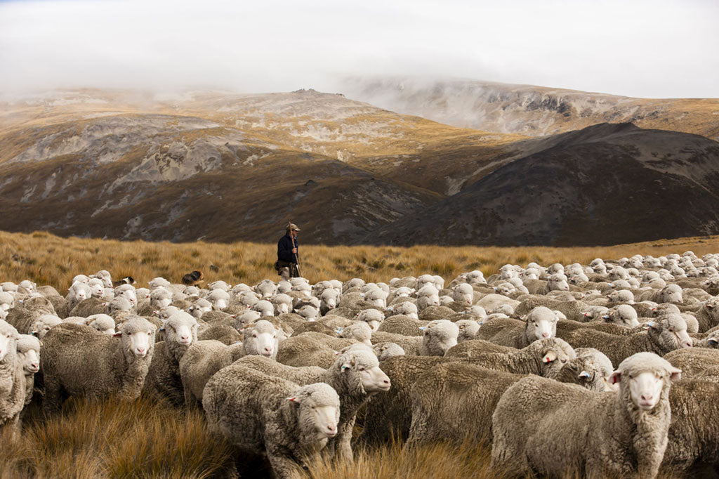 harmony ith nature. ethical merino wool farming
