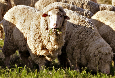 Why Merino Wool