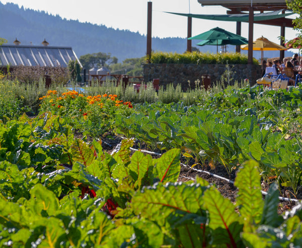 Culinary Garden at Pennyroyal Farm