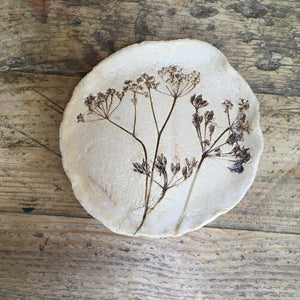 Botanical plate , cow parsley no.4