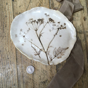 Botanical plate , cow parsley no.12
