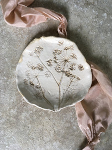 Botanical plate , cow parsley 9