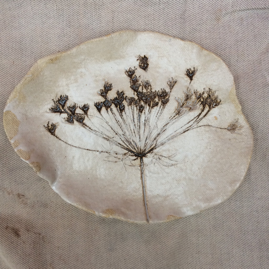 Botanical print plate , Queen Anne's Lace 1