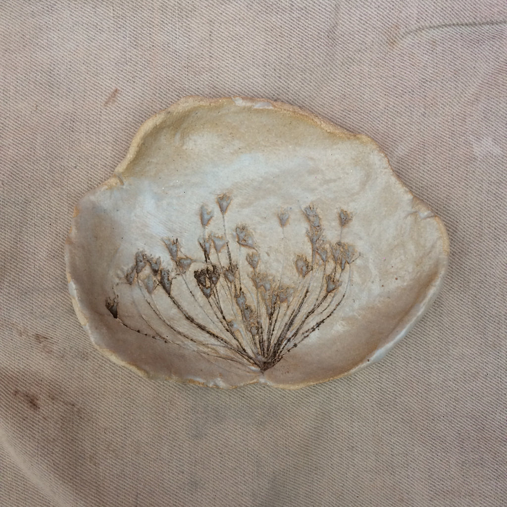 Botanical print plate , Queen Anne's Lace 2