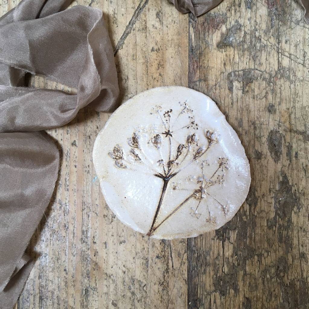 Botanical plate , cow parsley no.6