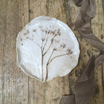 Botanical plate , cow parsley no.9