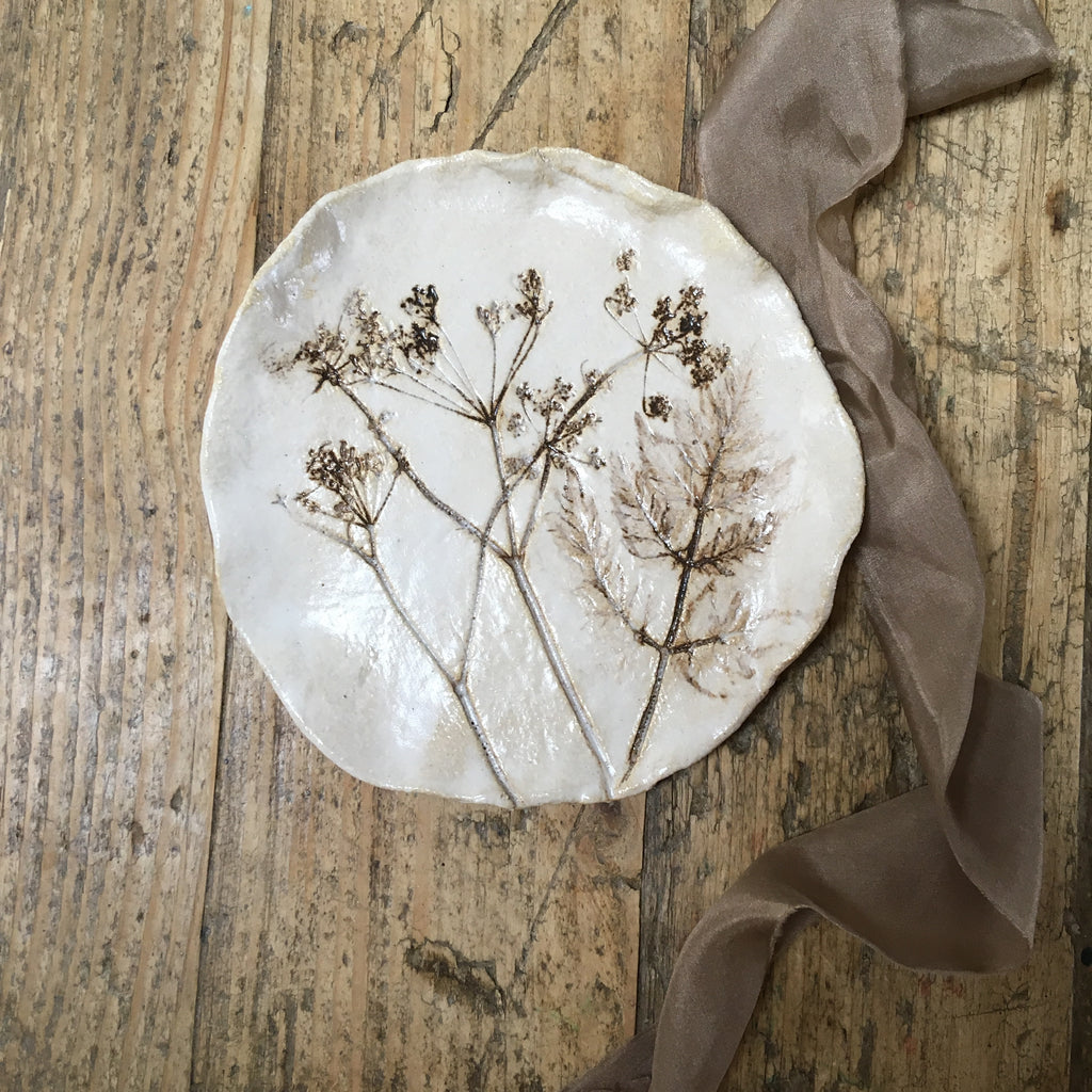 Botanical plate , cow parsley no.13