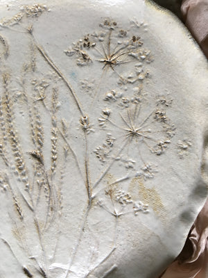 Botanical plate , cow parsley 10