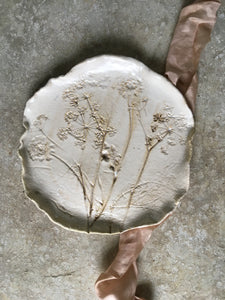 Botanical plate , cow parsley 11