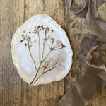 Botanical plate , cow parsley no.10