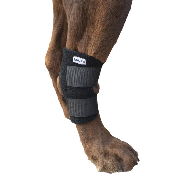 Large Dog Rear Leg Brace