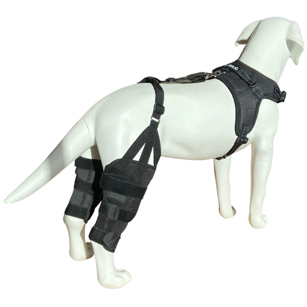 *Refurbished* Canine Dual Knee Brace with Hinged Metal Hinged Support System