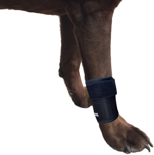 Canine Front Leg Wrap with Metal Spring Supports
