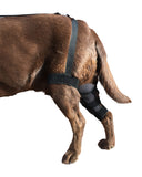 Canine Knee Brace ACL, MCL, CCL, Patella Injuries