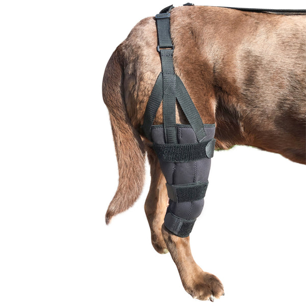 *Refurbished* Canine Knee Brace ACL, MCL, CCL, Patella Injuries