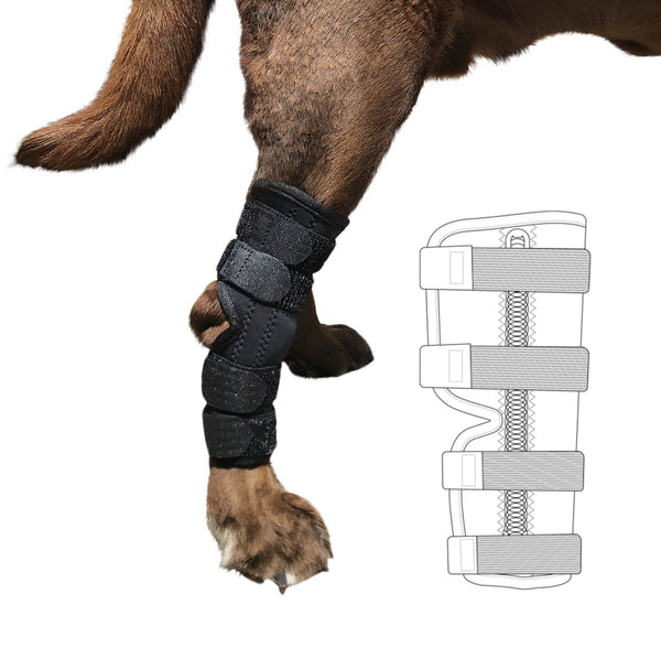Super Supportive Canine Hock Brace