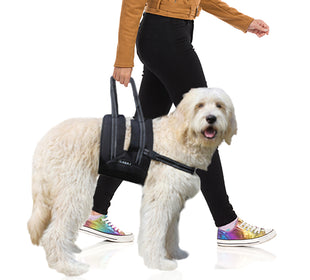 Canine Support Sling with Chest Strap
